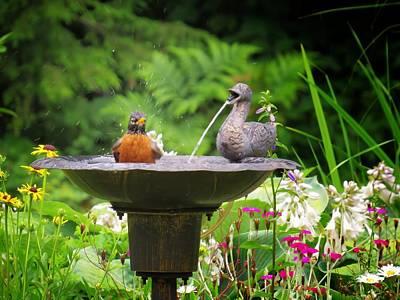 Photograph - Robin's Ducky Bath by MTBobbins Photography