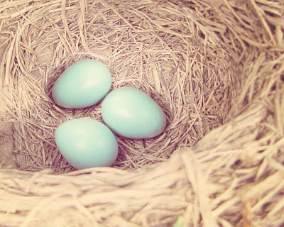 Photograph - Robin's Eggs by Amy Tyler