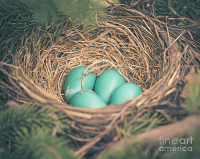 Photograph - Robin's Eggs In A Nest by Cheryl Baxter