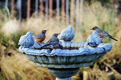 Robins On Birdbath Art Print by Barbara Rich