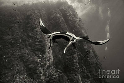 Photograph - Roca Partida Encounter by Aaron Whittemore
