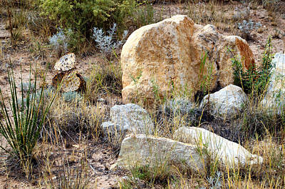Photograph - Rock And Cacti Garden by Tikvah's Hope