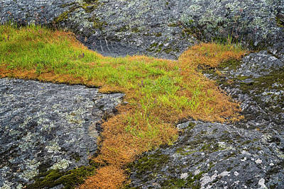 Photograph - Rock And Grass by Tom Singleton