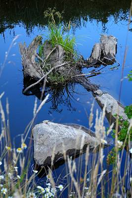 Jerry Sodorff Royalty-Free and Rights-Managed Images - Rock and Stump 3132 by Jerry Sodorff