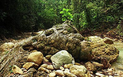 Photograph - Rock Centerpiece Rio Damajagua by Debbie Oppermann