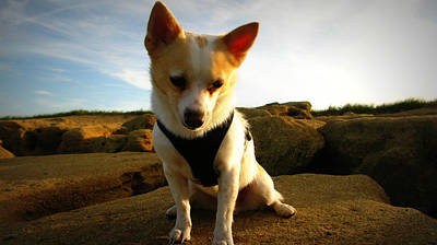 Photograph - Rock Climbing Rocko by Mandy Shupp