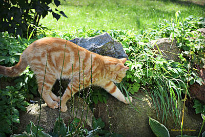 Photograph - Rock Climbing Tabby by Kathy M Krause