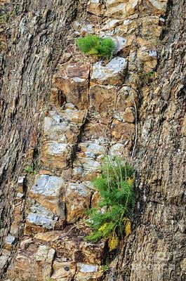Photograph - Rock Cutting 2 by Werner Padarin