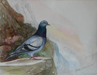 Sri Lankan Artist Painting - Rock Dove by Sasitha Weerasinghe