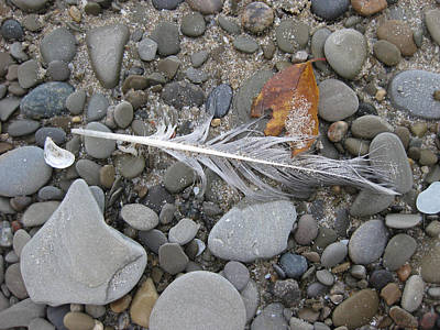 Photograph - Rock Feather Shell Leaf by Brenda Berdnik