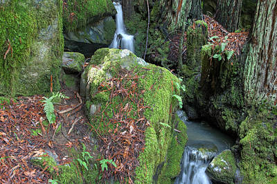 Photograph - Rock Fern Moss And Stream by Peter Dyke