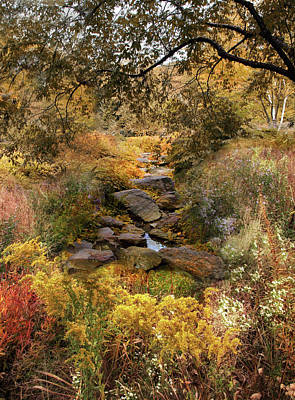 Photograph - Rock Garden Creek by Jessica Jenney