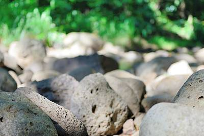 Photograph - Rock Garden by Michael Scott