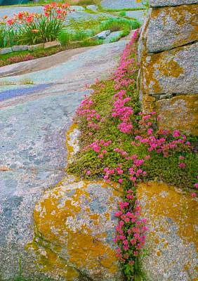 Photograph - Rock Garden by Polly Castor