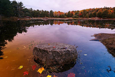 Fallen Leaf Photograph - Rock In A Pond by George Oze