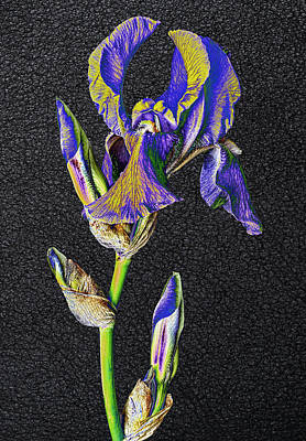 Photograph - Rock On Iris by Wes and Dotty Weber