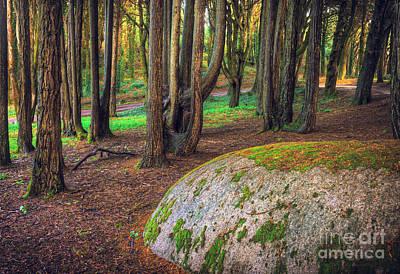 Rock On Woods Art Print by Carlos Caetano