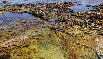Photograph - Rock Pool Trail Harbour by Lexa Harpell