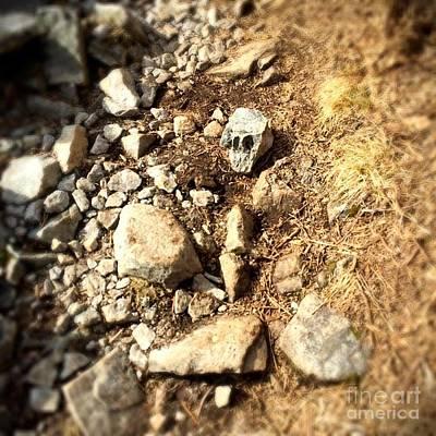Photograph - Rock Skull by Vennie Kocsis
