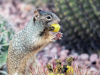 Photograph - Rock Squirrel 1089-011017-1cr by Tam Ryan