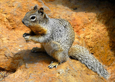 Photograph - Rock Squirrel by David Lee Thompson