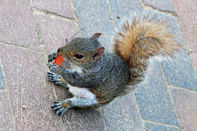 Photograph - Rock Star The Squirrel And His Love Of Carrots by Cora Wandel