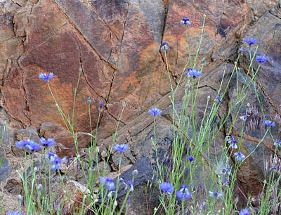 Photograph - Rock Wall Behind Cornflowers by Kae Cheatham