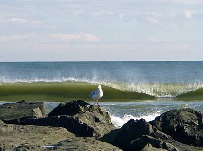 Photograph - Rock, Water, Bird by Ellen Paull