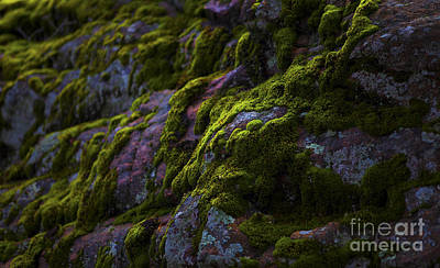 Rock With Green  Art Print by Barbara Schultheis