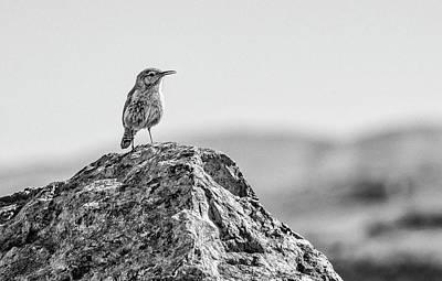 Photograph - Rock Wren 2bw by Rick Mosher