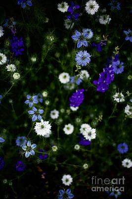 Rocket Larkspur And Love-in-a-mist Garden Flowers Art Print