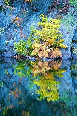Photograph - Rockface And Tree Reflected by Polly Castor