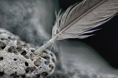 Photograph - Rockfeather by WB Johnston