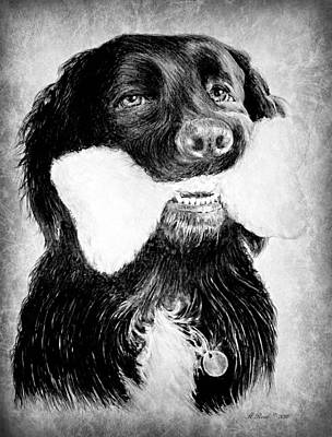 Pets Art Drawing - Rockie by Andrew Read