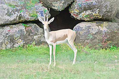 Photograph - Rockin' Gazelle by Judy Kay