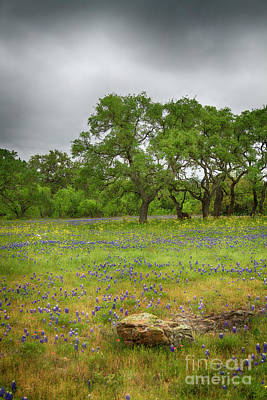 Photograph - Rocking The Bluebonnets by David Cutts