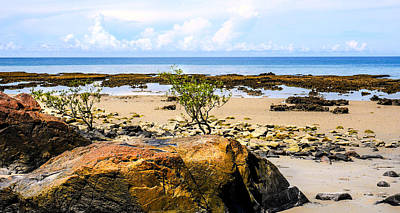 Photograph - Rocks And Coral - Cape Tribulation - Far North Queensland, Australia by Lexa Harpell