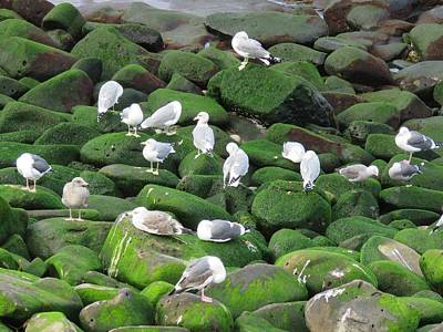Photograph - Rocks And Gulls by Keith Stokes