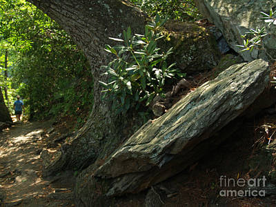 Rocks And Rhododendron At Chimney Rock Art Print