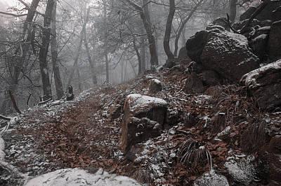 Photograph - Rocks And Trees by Jenny Rainbow
