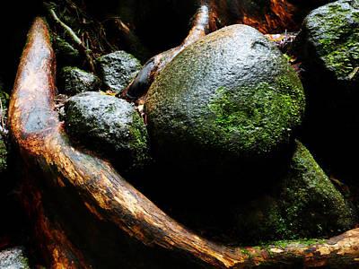 Photograph - Rocks In Rainforest - Mossman Gorge, Far North Queensland, Australia by Lexa Harpell