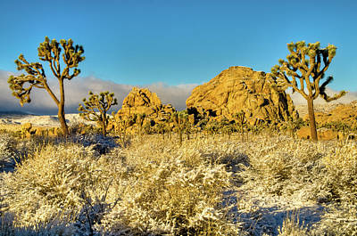 Photograph - Rocks Joshua Trees In Snow by Connie Cooper-Edwards
