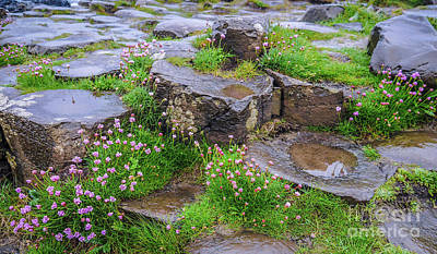 Photograph - Rocks Of Giants Causeway by Lexa Harpell