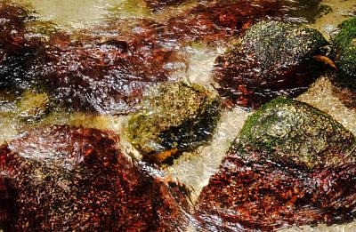 Photograph - Rocks Pool #2 - Mossman Gorge, Far North Queensland, Australia by Lexa Harpell