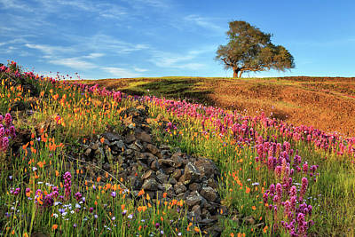 Photograph - Rocks Spring Flowers And A Tree by James Eddy