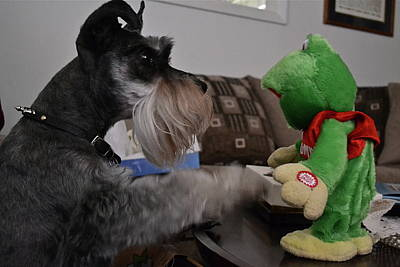 Photograph - Rocky And The Frog by Carol  Bradley