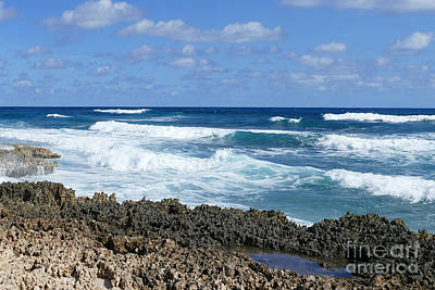 Photograph - Rocky Bahamas Beach by Catherine Sherman