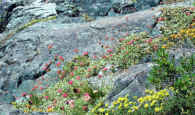 Photograph - Rocky Flowers by Brent Dolliver