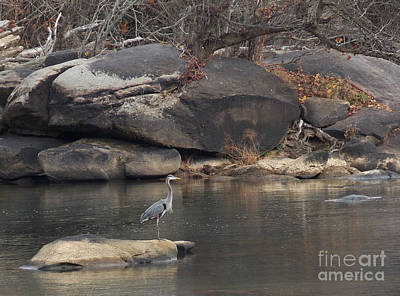 Bird Photograph - Rocky Haven Heron by Skip Willits