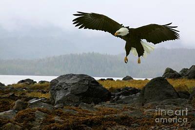 Photograph - Rocky Landing by Myrna Bradshaw